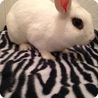 Adopt A Pet :: Pixie - Watauga, TX