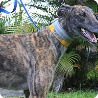 Adopt A Pet :: Balen - West Palm Beach, FL