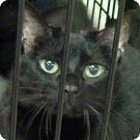 Adopt A Pet :: Beatrice and Molly - Lexington, KY