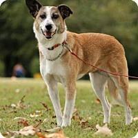 Adopt A Pet :: Racci - Jackson, TN