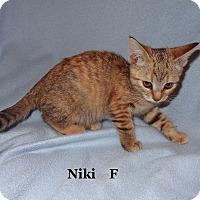 Adopt A Pet :: Niki - Bentonville, AR