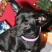 Adopt A Pet :: Prissy - Waldorf, MD