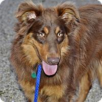 Adopt A Pet :: Zeppy - Meridian, ID
