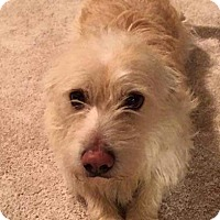 Adopt A Pet :: Henry - Bakersfield, CA