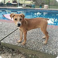 Adopt A Pet :: Marley - Manchester, VT