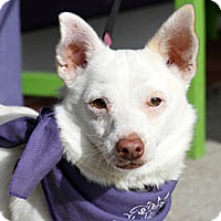 Adopt A Pet :: Wylie - Pacific Grove, CA