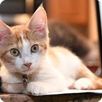 Adopt A Pet :: JoeyW - North Highlands, CA