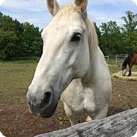 Adopt A Pet :: Gabby - Fairport, NY