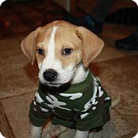 Adopt A Pet :: Austin - Brooklyn, NY