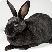 Other/Unknown for adoption in Kingston, Ontario - Midnight