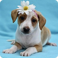 Adopt A Pet :: Shannon - Picayune, MS