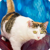 Adopt A Pet :: Cassidy - Columbus, IN