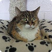Adopt A Pet :: Tabitha - Grayslake, IL
