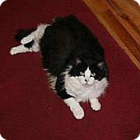 Adopt A Pet :: Koko - Fredericksburg, VA