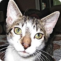 Adopt A Pet :: Monty & Cuda - Deerfield Beach, FL