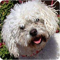 Adopt A Pet :: Boe - Gilbert, AZ