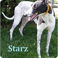 Adopt A Pet :: Starz - Fremont, OH