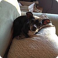 Adopt A Pet :: Brando - Providence, RI