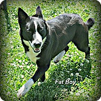 Adopt A Pet :: Fat Boy - Vancleave, MS