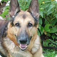 Adopt A Pet :: Cody - Wayland, MA