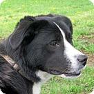 Adopt A Pet :: Isabella