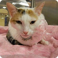 Adopt A Pet :: Emma - The Colony, TX