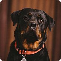 Adopt A Pet :: Kyla - Portland, OR
