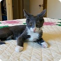 Adopt A Pet :: Thor - Chattanooga, TN