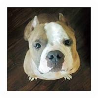 Adopt A Pet :: Biscuit - Dallas, TX