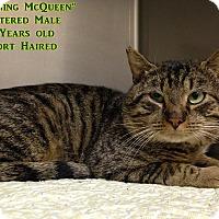 Adopt A Pet :: B-2 Lightning McQueen - Triadelphia, WV