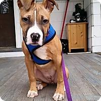 Adopt A Pet :: Penny - West Allis, WI