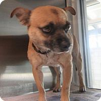 Adopt A Pet :: Argo - North Richland Hills, TX