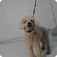 Adopt A Pet :: A354886 - Orlando, FL