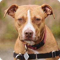 Adopt A Pet :: Nova (foster) - Portland, OR