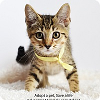 Adopt A Pet :: Taffy - Xenia, OH