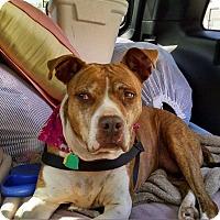 Adopt A Pet :: Roxie - Overland Park, KS