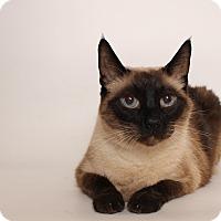 Adopt A Pet :: Izzy - Glendale, AZ