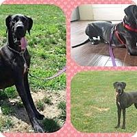 Adopt A Pet :: Nora - DOVER, OH