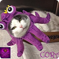 Adopt A Pet :: Cora - East Brunswick, NJ