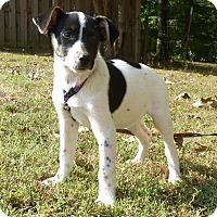 Adopt A Pet :: Carrie Ann - Hartford, CT