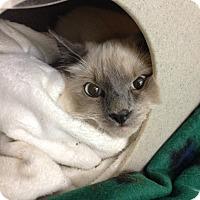 Adopt A Pet :: Bandit - Hendersonville, NC