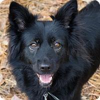Adopt A Pet :: Shyly - Reidsville, NC