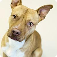 Adopt A Pet :: savion - Appleton, WI