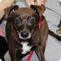 Adopt A Pet :: Coco - Wauchula, FL