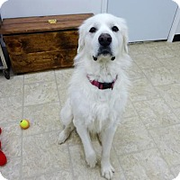 Adopt A Pet :: Gracie - Belleville, MI