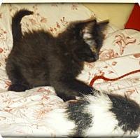 Adopt A Pet :: Alice - Walnut Creek, CA
