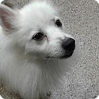 Adopt A Pet :: Sophia, of Cincinnati, Ohio - Lindsey, OH