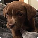Adopt A Pet :: Alfalfa (The Little Rascals)