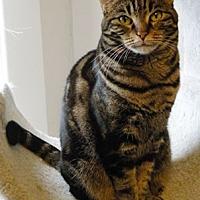 Adopt A Pet :: Kiki - Anacortes, WA