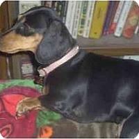 Adopt A Pet :: NIXIE - Portland, OR